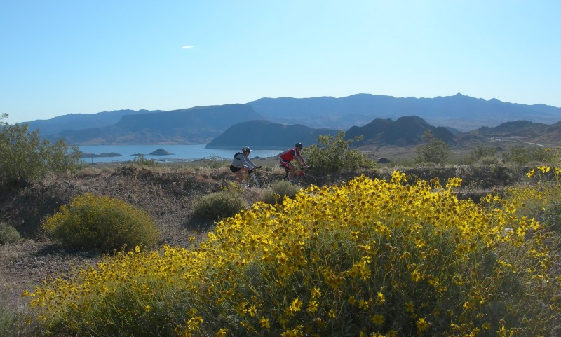 Wildflowers and Lake Mead